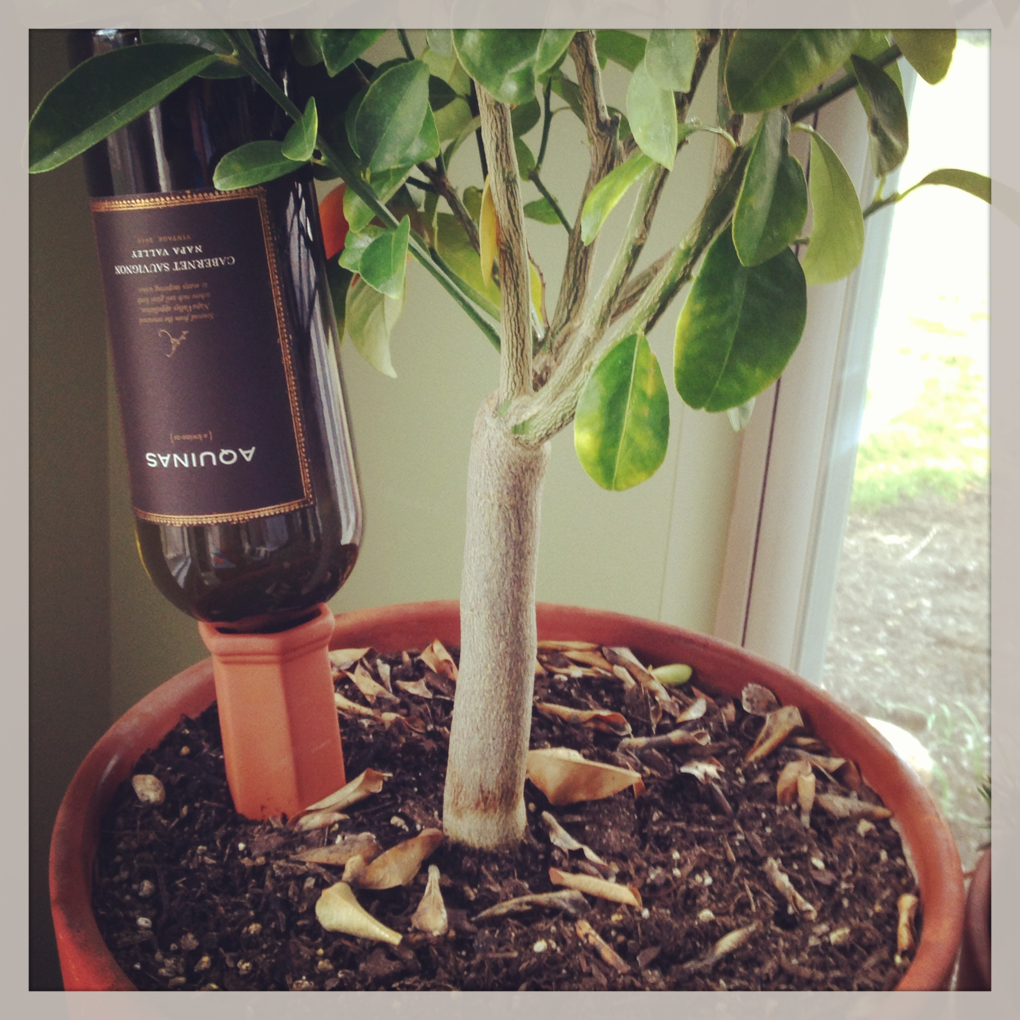 Plant Nanny Watering Stakes Just Add A Wine Bottle