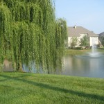 HOA Landscape Maintenance—an Introduction