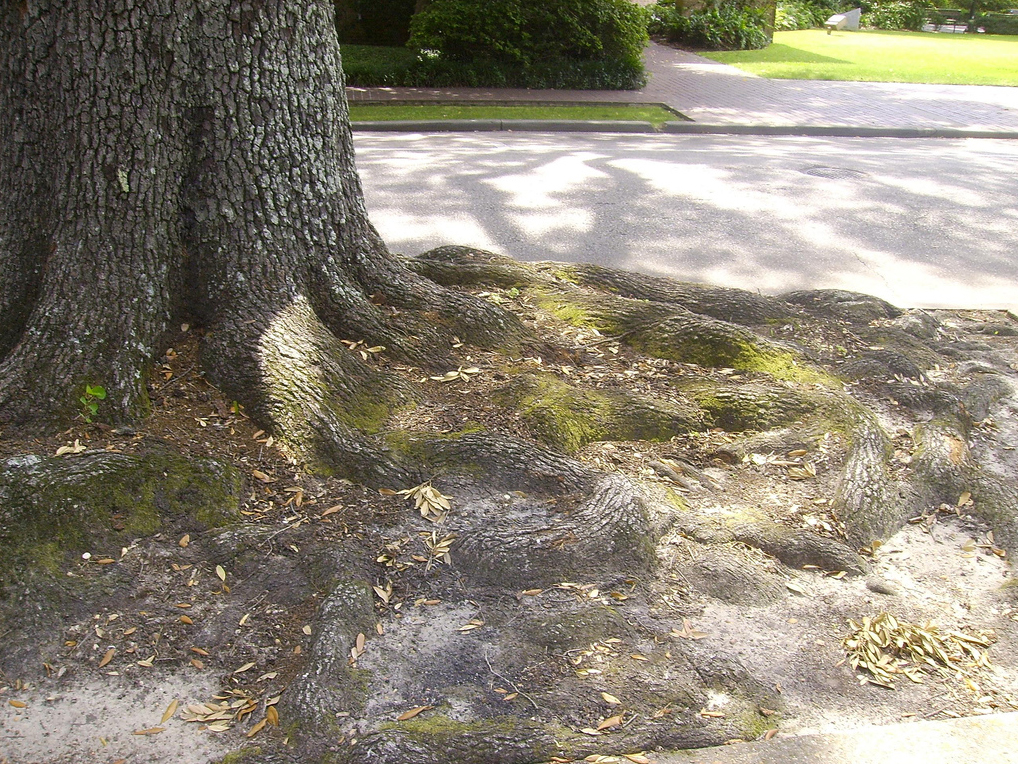 Root Landscaping : Plant root growth in varying soil conditions engledow group