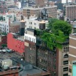 Growing Trend: Green Roofs
