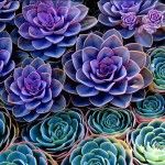 The Rise of The Succulent Plants